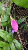 Flor tropical rosada Imagen de archivo