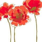 Flor três da papoila Foto de Stock Royalty Free