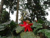 Flor upstair Imagem de Stock