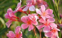Flor (vegetación en la isla de Samos) Imagenes de archivo