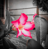 Flor verdadera Imagen de archivo