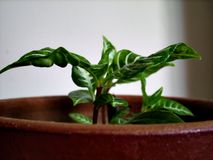 Flor verde Imágenes de archivo libres de regalías