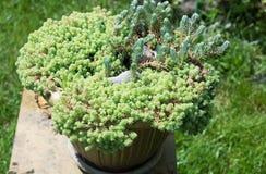 Flor verde Fotografía de archivo libre de regalías