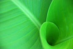 Flor verde Imagens de Stock Royalty Free