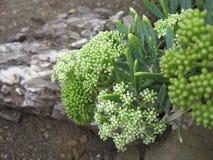 Flor verde Fotos de archivo