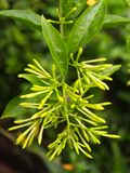 Flor verde Fotos de Stock