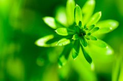 Flor verde abstrata Foto de Stock Royalty Free