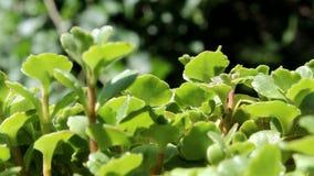 Flor verde, arbustos en fondo natural blured almacen de metraje de vídeo