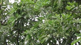 Flor verde da árvore do quadro-negro filme