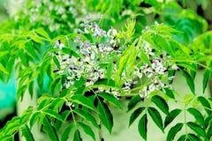 flor verde da folha fotos de stock royalty free