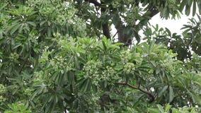 Flor verde del árbol de la pizarra almacen de metraje de vídeo