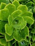 Flor verde después de la lluvia ligera 4k Imagen de archivo libre de regalías
