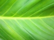Flor verde do fundo Imagens de Stock Royalty Free
