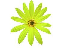 A flor verde do jardim, branco isolou o fundo com o close up do trajeto de grampeamento Fotos de Stock Royalty Free