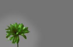 Flor verde em um fundo cinzento Fotos de Stock