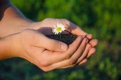 Flor verde en las manos Imágenes de archivo libres de regalías