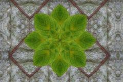 Flor verde en modelo seco de la hoja Imágenes de archivo libres de regalías