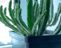 Flor verde en un pote cerca de la ventana fotos de archivo