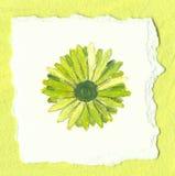 Flor verde no fundo verde Fotografia de Stock