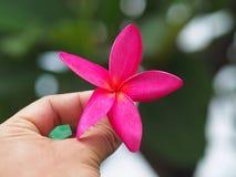 Flor vermelha à disposição para borrar o fundo fotografia de stock royalty free