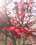 Flor vermelha foto de stock royalty free