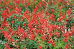 A flor vermelha fotos de stock royalty free