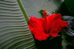 Flor vermelha Foto de Stock