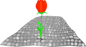 Flor vermelha Fotos de Stock Royalty Free