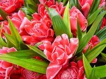 Flor vermelha Fotografia de Stock Royalty Free