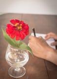 Flor vermelha Imagens de Stock Royalty Free