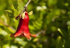 Flor vermelha brilhante Fotos de Stock