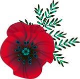 Flor vermelha brilhante da papoila, ilustração do vetor, ilustração royalty free