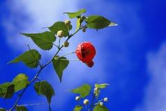 Flor vermelha com céu azul Fotografia de Stock