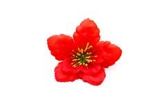 Flor vermelha com folhas fotografia de stock royalty free