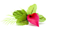 Flor vermelha com folhas verdes fotos de stock royalty free