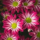 Flor vermelha com fundo das gotas imagens de stock royalty free