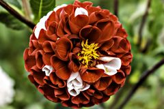 Flor vermelha consideravelmente imagens de stock royalty free