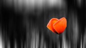 Flor vermelha da mola da esperança na arte abstrato dos sonhos Fotos de Stock Royalty Free
