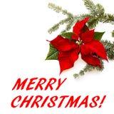 Flor vermelha da poinsétia com árvore de abeto e neve no fundo branco Cartão de Natal dos cumprimentos postcard christmastime Bra ilustração do vetor