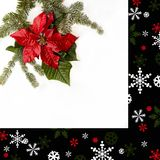 Flor vermelha da poinsétia com árvore de abeto e neve no fundo branco Cartão de Natal dos cumprimentos postcard christmastime Bra fotos de stock
