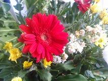 Flor vermelha do casamento Fotos de Stock Royalty Free