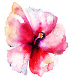 Flor vermelha do hibiscus Imagem de Stock Royalty Free