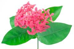 Flor vermelha do ponto foto de stock royalty free