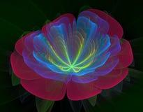 Flor vermelha e azul Fotografia de Stock Royalty Free