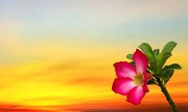 Flor vermelha em céu movente da nuvem e do por do sol Foto de Stock