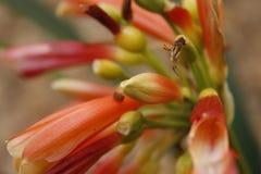 Flor vermelha em um jardim fotografia de stock royalty free