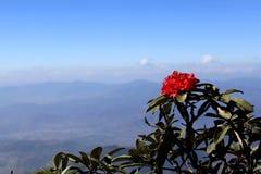 Flor vermelha na parte superior imagem de stock