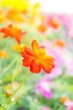 A flor vermelha no parque, flor colorida Fotografia de Stock Royalty Free