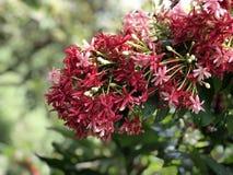 Flor vermelha que floresce no jardim fotos de stock royalty free
