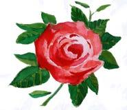 Flor vermelha, uma pintura da aguarela Ilustração do Vetor